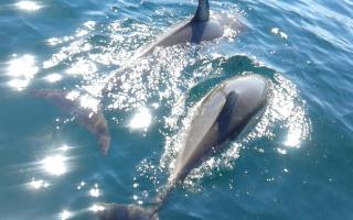 Delfinsafari i Algarve